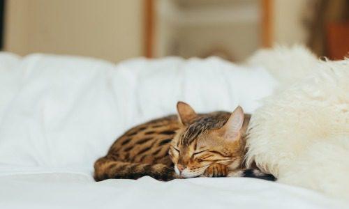 熱帯夜にクーラーをつけずに寝る方法
